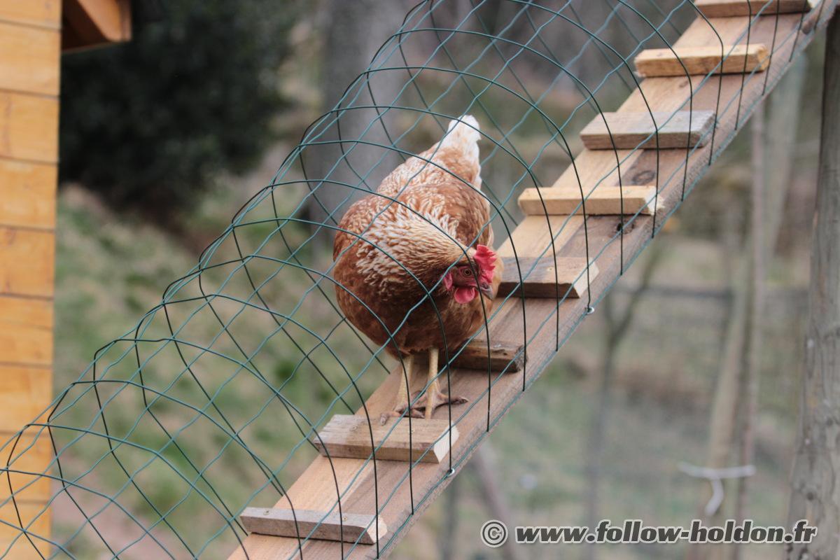Des poules pour un beau et bon potager les aventures - Grillage de poule ...