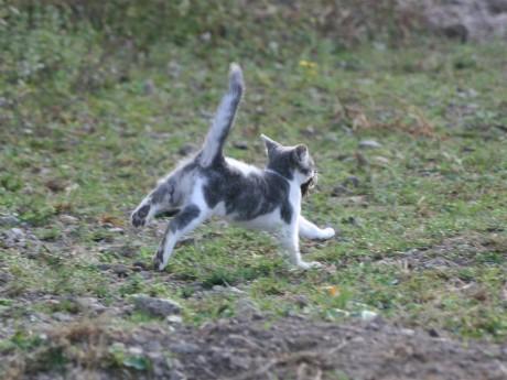 Tertone futur grand chasseur de souris !