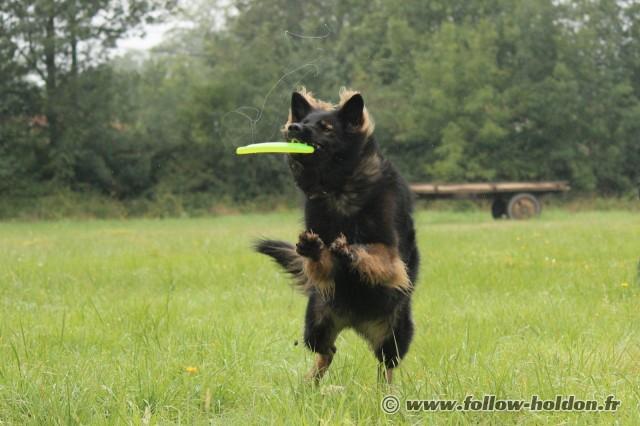 Frisbee verrouillé et un joli filet de bave !