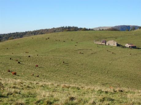 On a croisé plein de vaches qui nous regardaient de travers