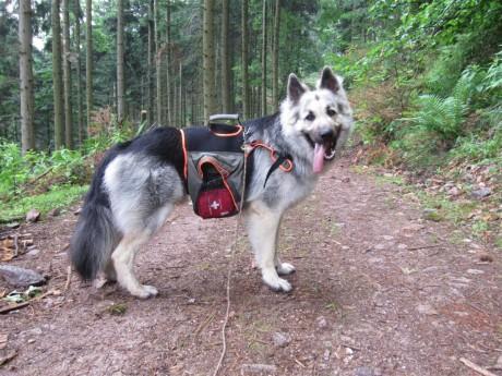 Tout beau avec mon sac à dos pour chien