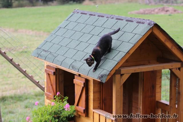 Manque plus que les gouttière pour en faire un vrai chat de gouttières !