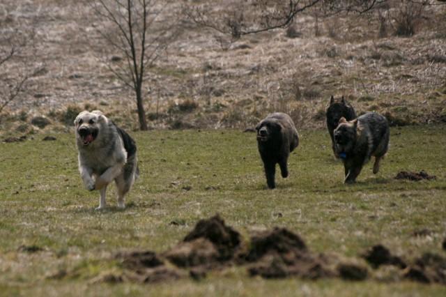 Courrez-moi après... ca me plait !!!