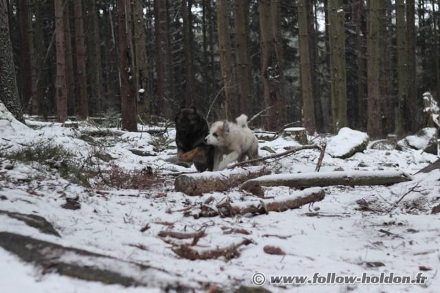 Youuhoooo !!!! C'est rigolo de faire la course dans la neige !