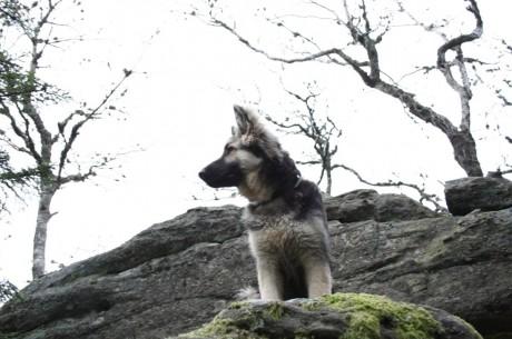 Là mon maitre s'est dit que ca serait sympa une photo de moi sur un rocher