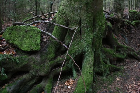 Un arbre recouvert d'une belle mousse verte