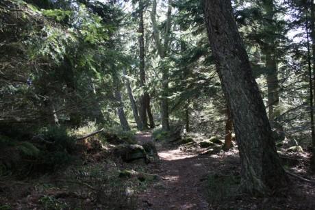 Sentez moi cette bonne odeur de forêt !