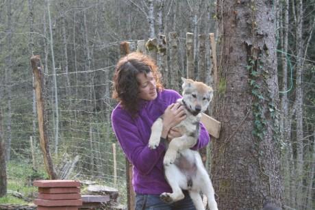 Glamour Milla une chienne de la portée Artic et Déva