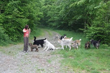 La bergère et son troupeau de chiens