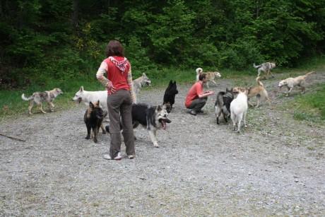 On essaye de compter le nombre de chiens...