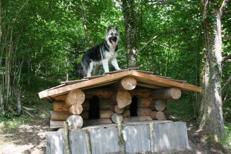 Altdeutsche Schaferhunde
