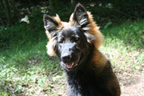 Yasna, une vraie petite bombe cette chienne