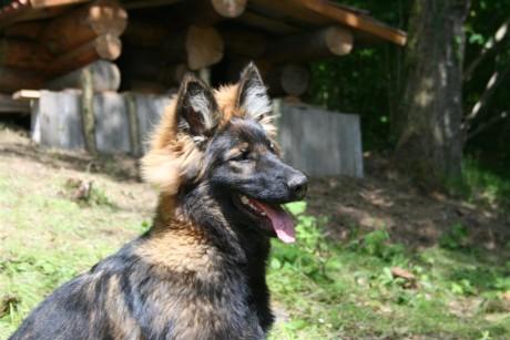 Yasna va devenir une chienne tout simplement magnifique