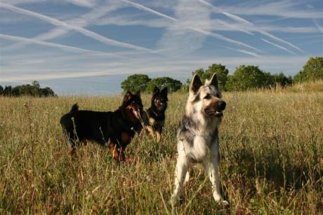 Dans les champs avec mes copines Bergers de Bohème