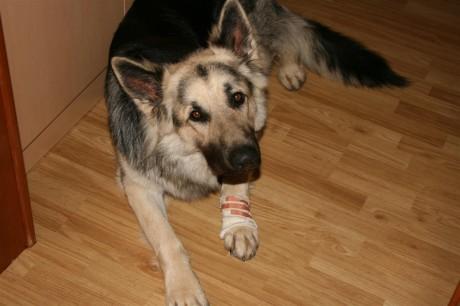 C'est trop nul d'avoir un bandage !