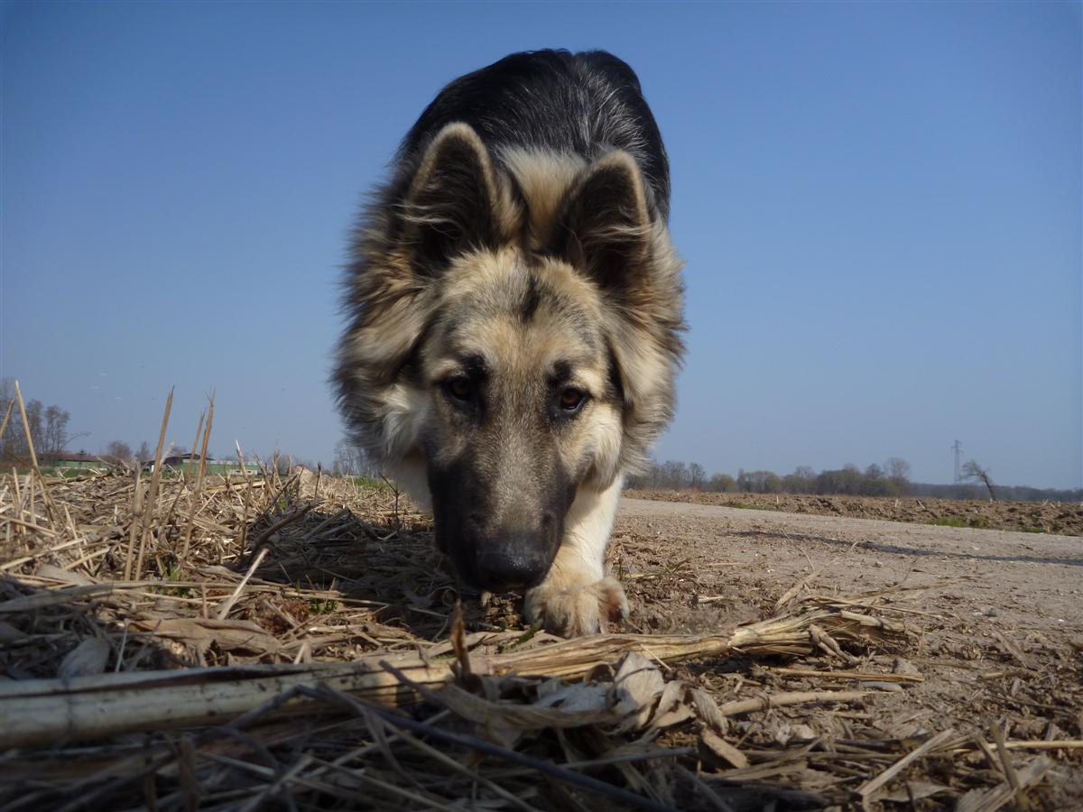 Le maïs c'est pas bon pour les chiens mais les pieds oui !
