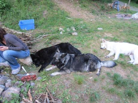 Queirra, Emine et Chesnaye qui s'endorment devant le feu et les brochettes