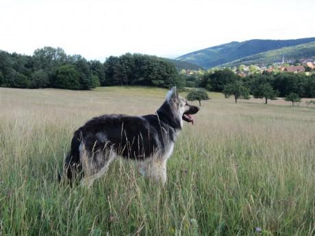 Le chant des agneaux plus loin ne me laissait pas indifférent !