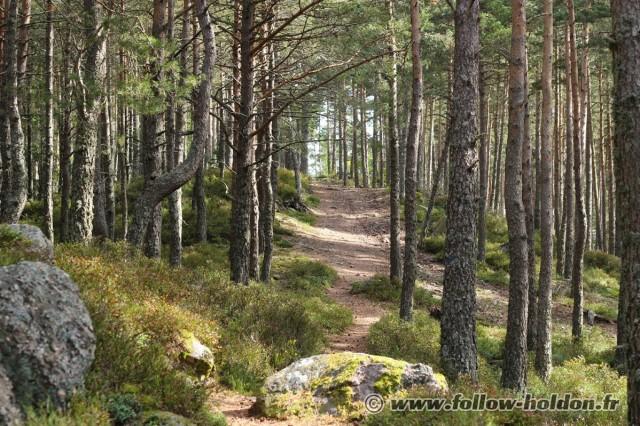 La forêt enchantée !