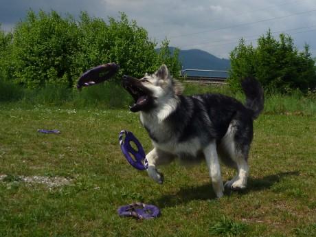 Je lache un frisbee pour attraper le suivant !