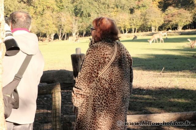 Un Léopard en liberté au parc de Sainte Croix