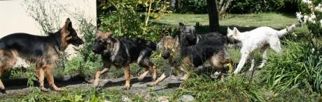 Rencontre Altdeutsche Schaferhunde en Suisse